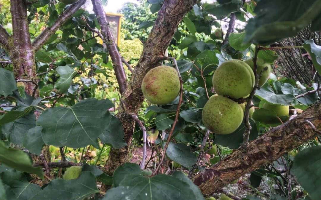 Fruit Tree Pruning Workshop – Saturday, February 15th at 11 am