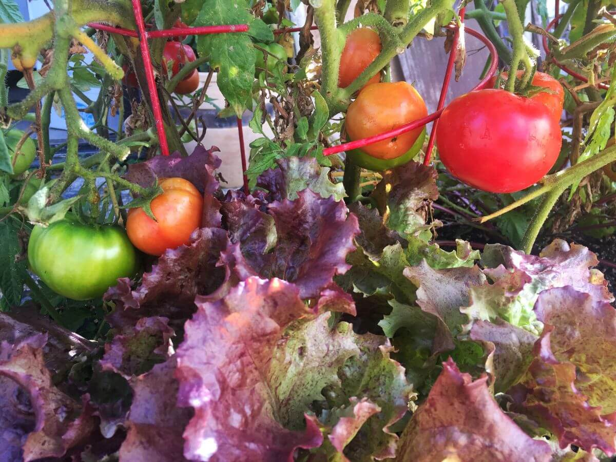 Fall Vegetable Garden Workshop