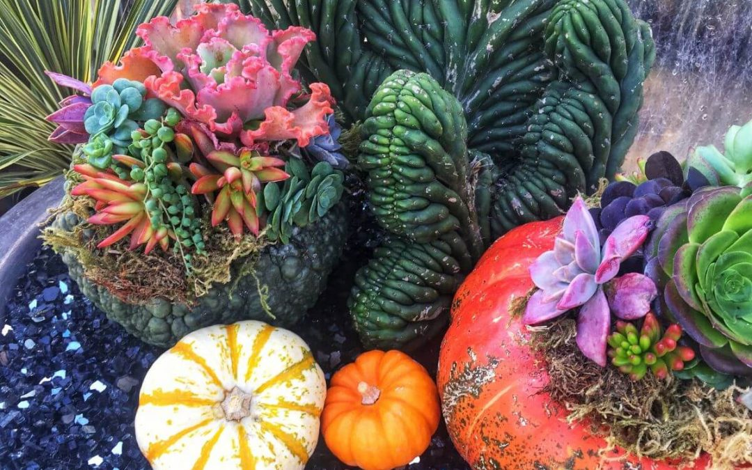 Succulent Pumpkin & Planter Workshop – Saturday October 10th 2020 2:00 PM