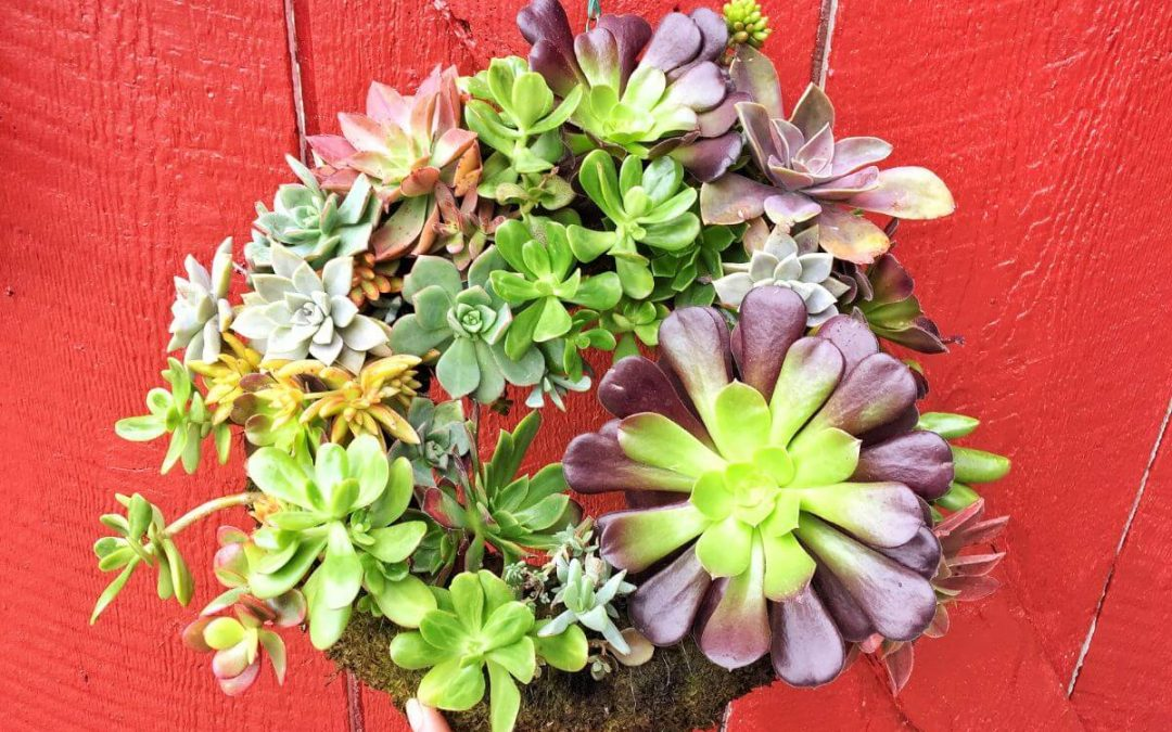 Succulent Wreaths – Saturday February 8th 2020 2:00 PM