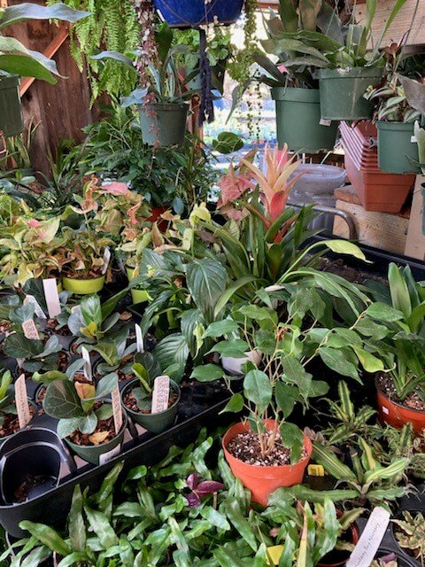 Houseplant Sale – November 17-30, 2020